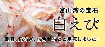富山湾の宝石 白エビ